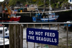 Do not feed the seagulls